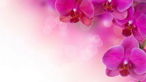 pink_flower_bg-300x169 pink flower bg